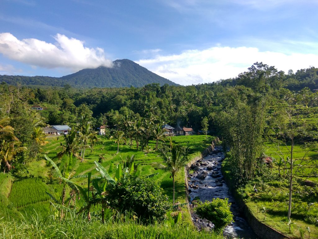 Tabanan Scenary Rice Terrace